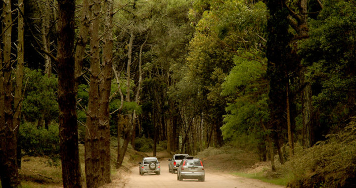 Plan director de Carilo peligra el bosque, Roberto Elorz dijo que se estan vendiendo lotes sin la aprobacion del concejo deliberante