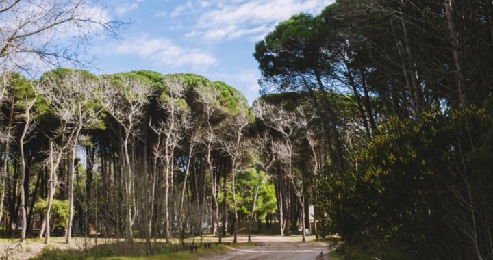 Más cemento y menos bosque, avanza el plan director Cariló, los concejales quieren aprobarlo