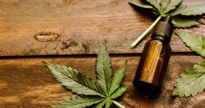 Por unanimidad los concejales aprobaron el proyecto de cannabis medicinal en Pinamar